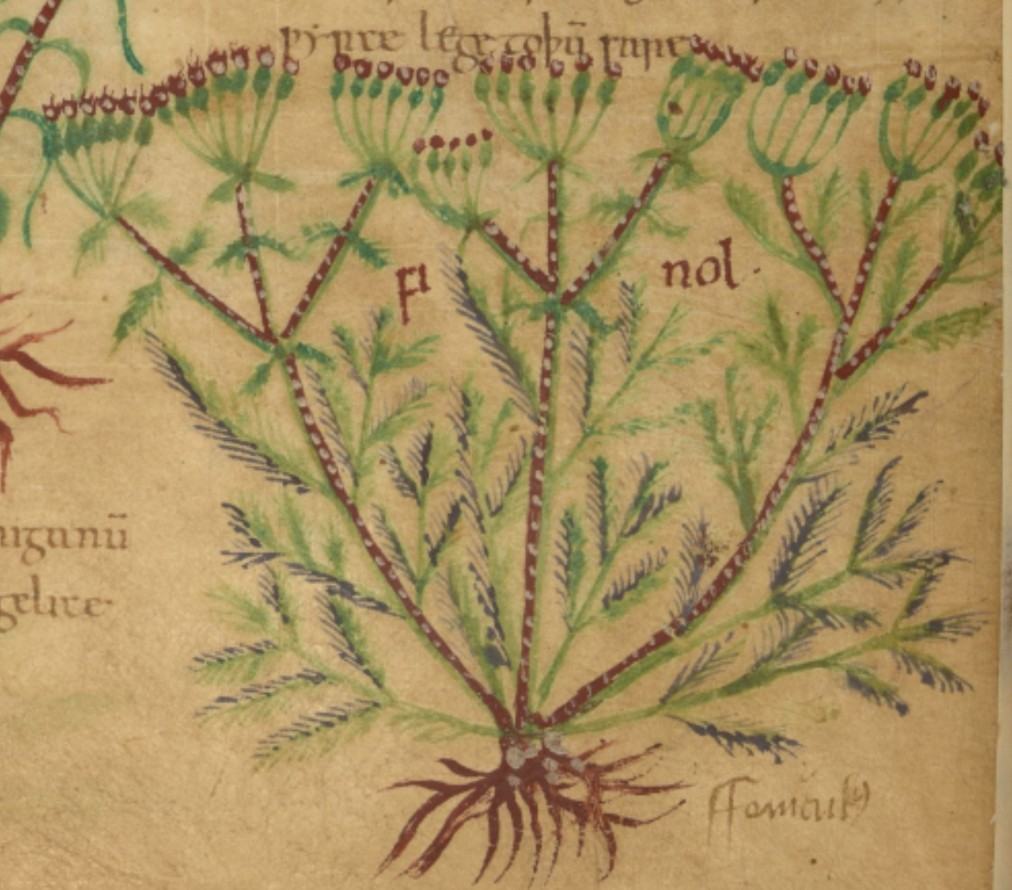 Herbs in early England